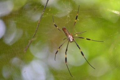 Spider in jungle in Tulum