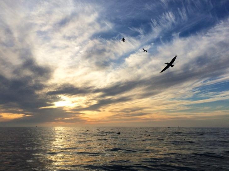 Sea sunset with seagulls and pelicans