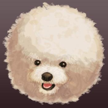 Floating cute poodle head
