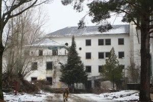 Dog entering an abandoned mental hospital